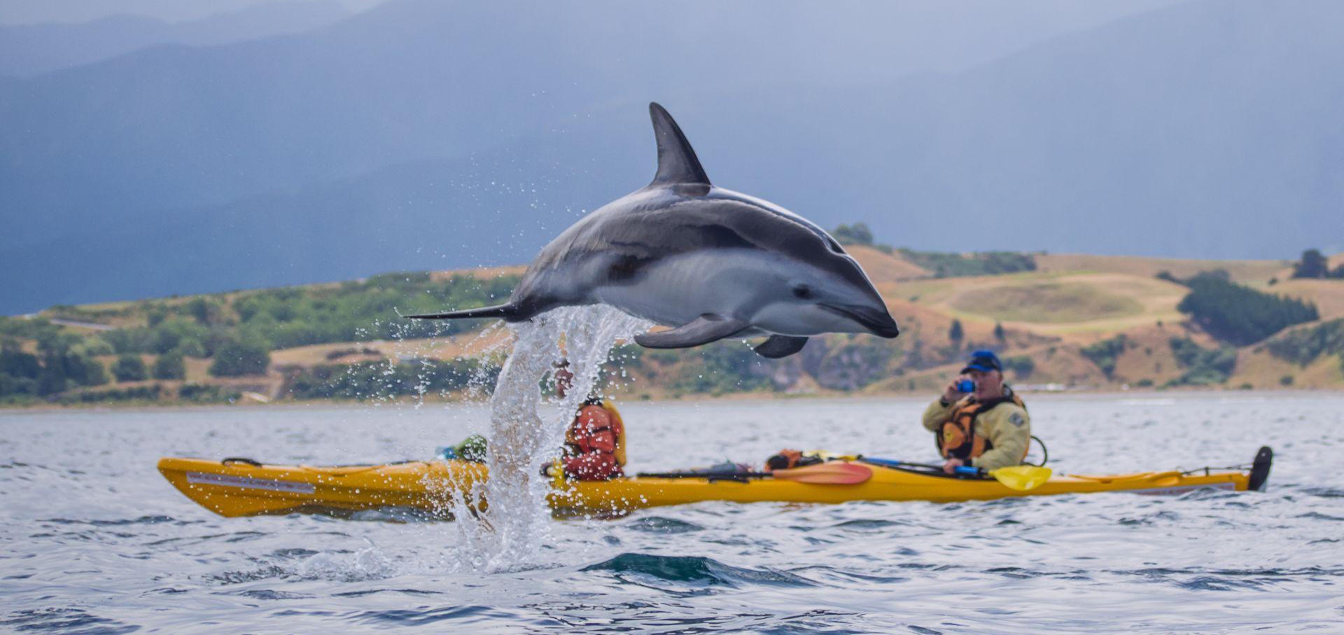 Kayaking Kaikoura | Kaikoura Kayaks