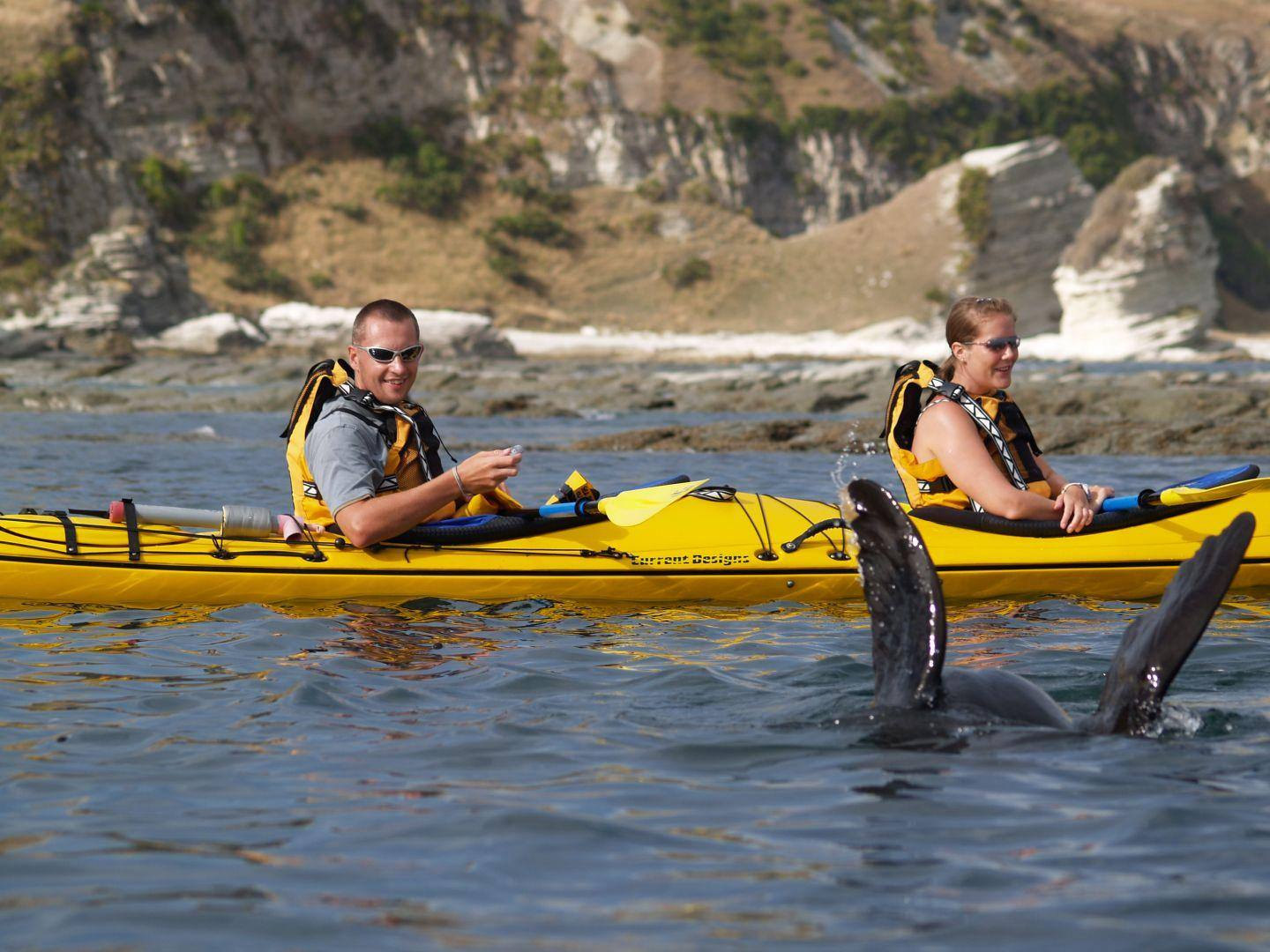 Sea Kayak Hire Kaikoura Kayaks