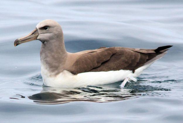 Birdlife Kaikoura