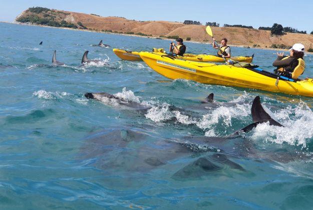 Dusky Dolphins Kaikoura Kayaks