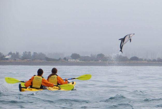 Dolphin Kaikoura NZ