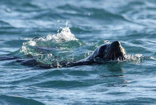 NZ Fur Seal Kaikoura