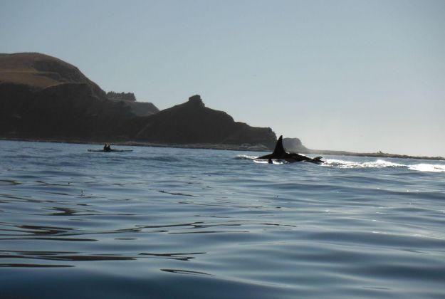 Orca Whales Kaikoura Kayaks