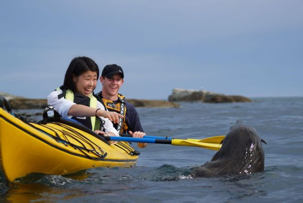 Wildlife Kayaking Kaikoura kayaks
